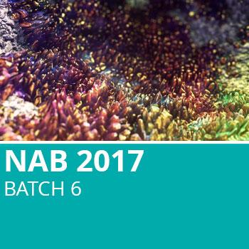 NAB 2017 Batch 6